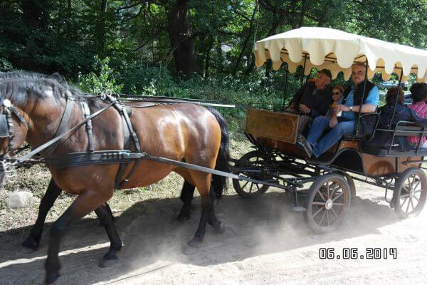 Kutschfahrt auf dem Pferdehog Zislow - Prignitzer Leasing - Pferdeleasing