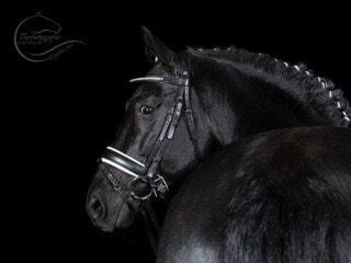 Tiere leasen – Weiterbildung einmal anders auf dem Pferdehof Zislow